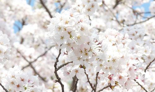 spring-302979_640